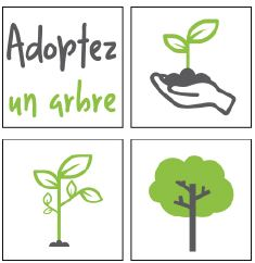 Adopter-un-arbre-grand-quevilly